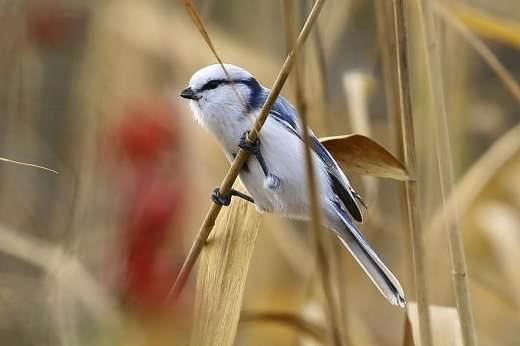Új madárfajt figyeltek meg Magyarországon