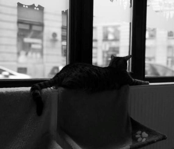 Gyerekszemmel a világ – Cat Café