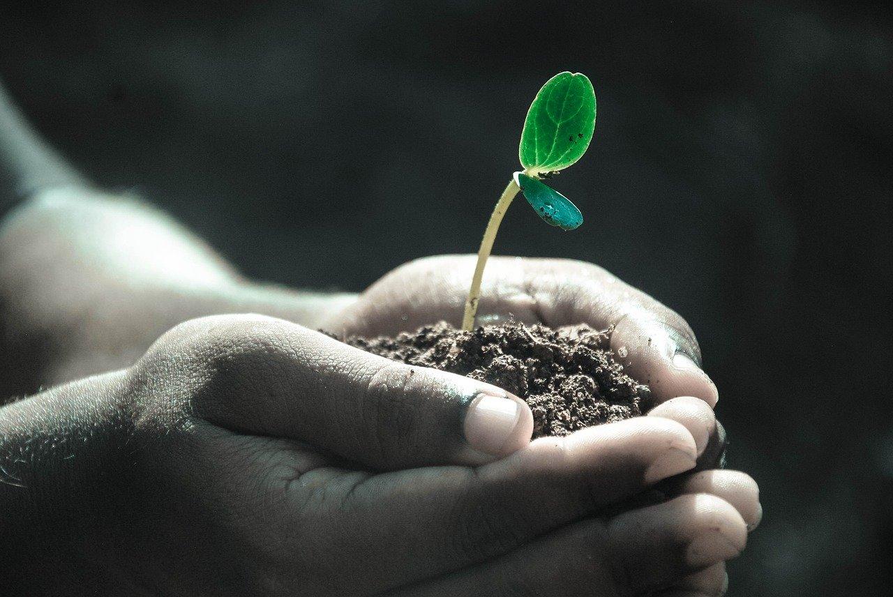 Élet növény ember