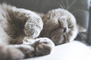 Macska pihenés család otthon