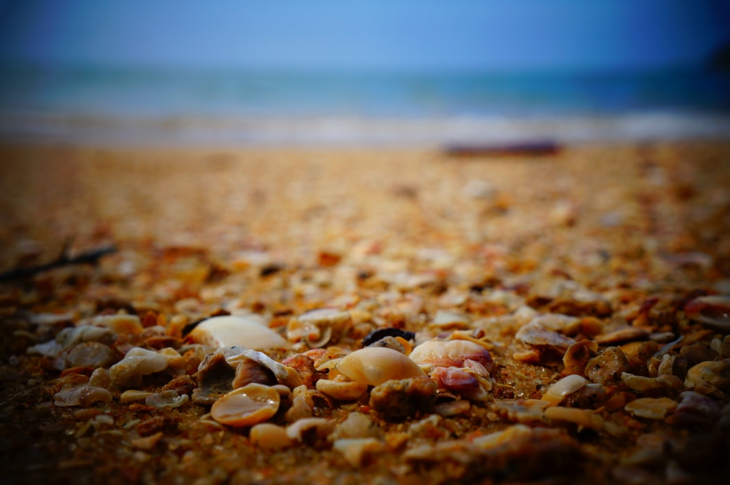"""""""Titkot legjobban a kagylóhéjak tudnak tartani"""" – Könyvajánló"""