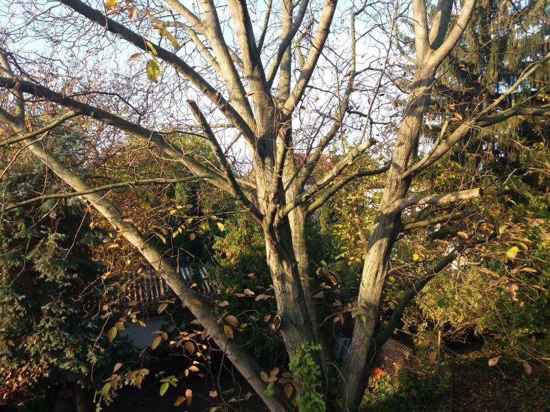 Milyen bölcs lehet egy dió, egy vén diófa? – Diószüret 2020